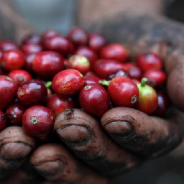 1日限定カフェ & 太古の森のコーヒー体験講座へのお誘い